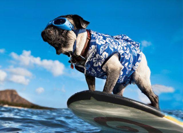 ペット同伴でハワイ旅行はできるの?
